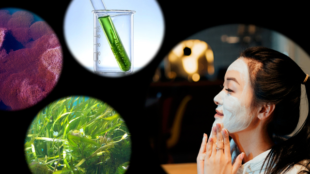 Are Skincare Products With Algae the Fountain of Youth?